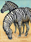 Zebras, original oil painting by Eugenia Talbott