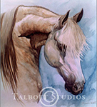Portrait of Diamond Robert, original watercolor painting of a grey Arabian horse by Eugenia Talbott