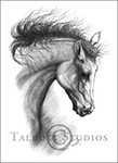 Portrait of M.T.Dubai, original graphite drawing of an Arabian horse by Eugenia Talbott