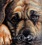 Watercolor portrait of Bruiser, a pet dog, by Eugenia Talbott